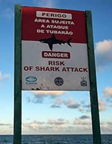 Risk Of Shark Attack